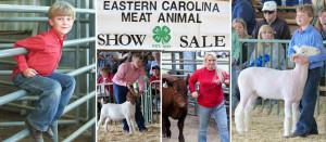 4H, Livestock