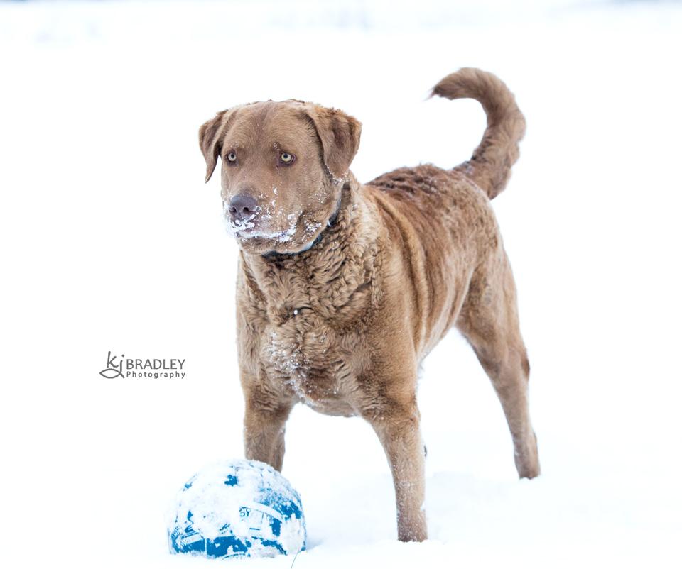 snow_day_nc_kj_bradley_photography (3)