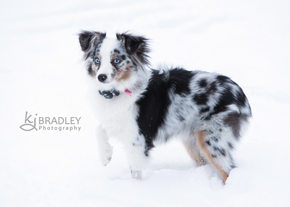 snow_day_nc_kj_bradley_photography (4)