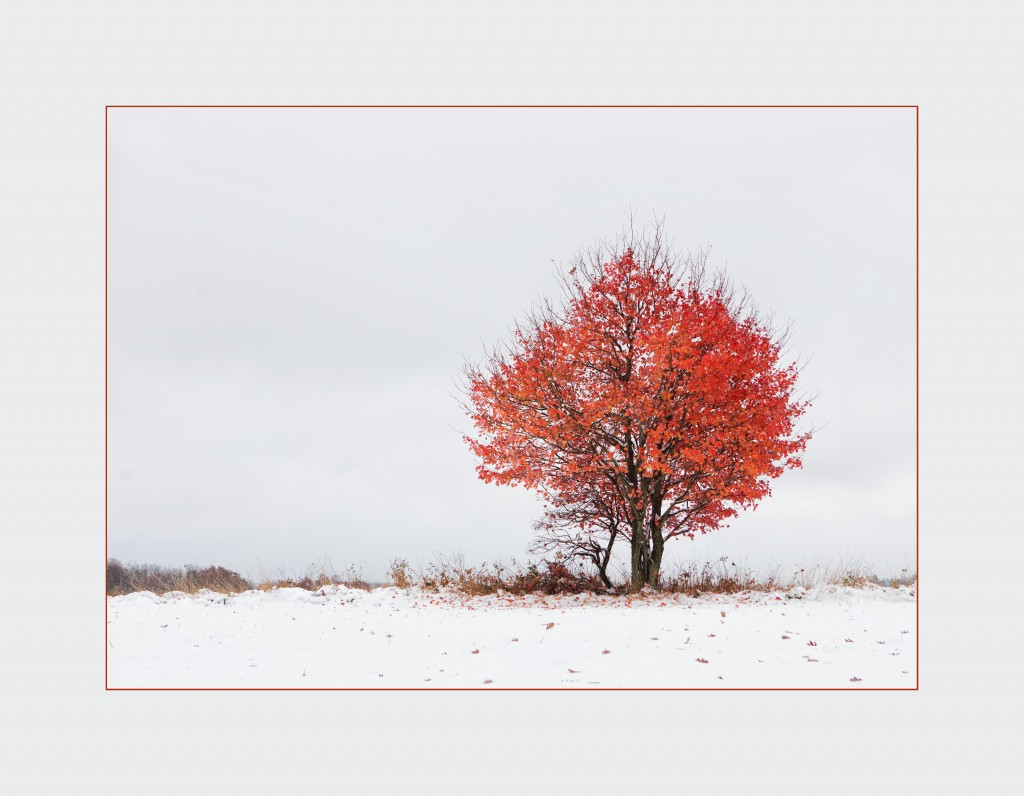 Snow_Fall_Red_Tree_Merit_Landscape