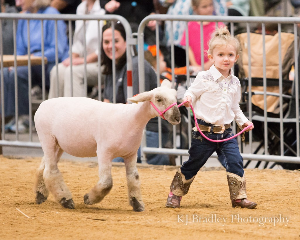 2015 NC State Fair is in the Books! | Livestock Photography by KJ Bradley