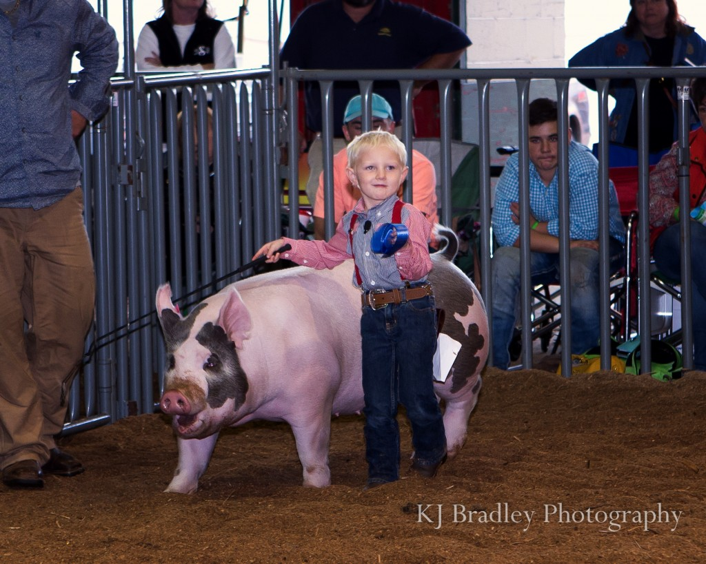 NC_State_fair_swine-1502-Edit