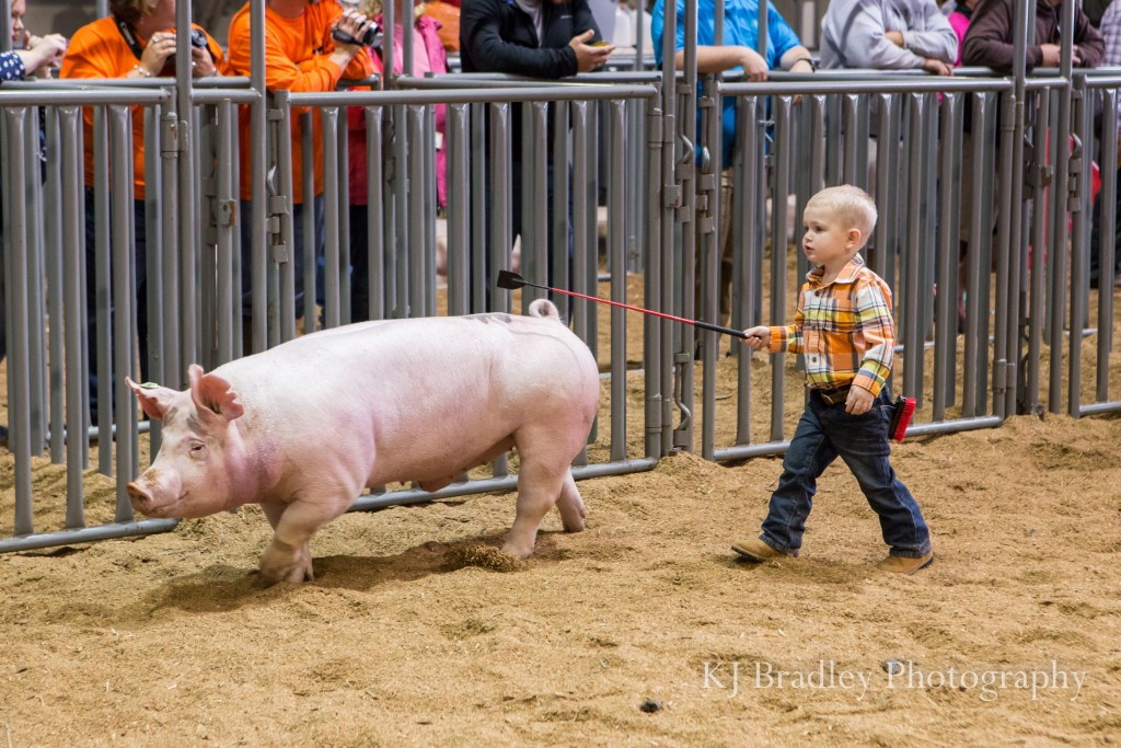 NC_State_fair_swine_showmanship-1286