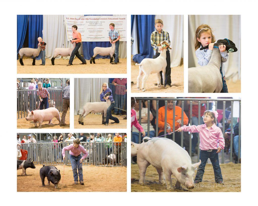 NC State Fair Livestock